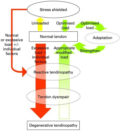 teniosis patogenezis