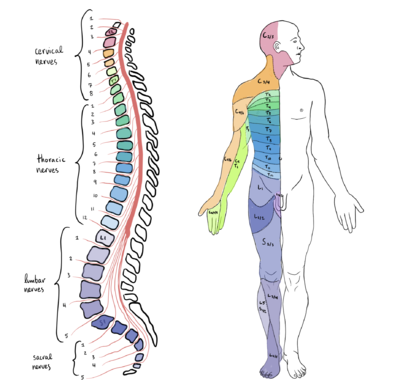 Physiotherapy Management Of Individuals With Spinal Cord Injury Physiopedia
