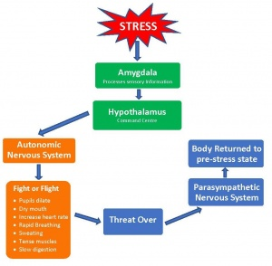 Acute Stress - Physiological Response