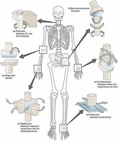 simptome ale bolilor osoase și articulare cum se tratează artroza genunchiului 2 grade