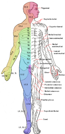Lumbar Radiculopathy - Physiopedia