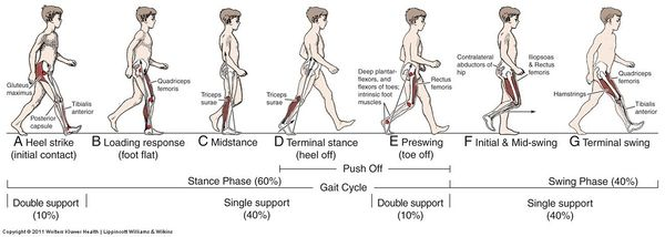 Gait-Cycle.jpg