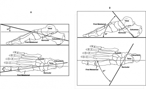 Foot And Ankle Structure And Function Physiopedia