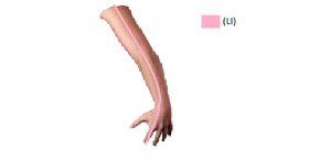 Large Intestine channel.png