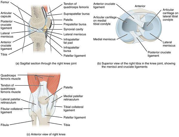 Ér (anatómia)