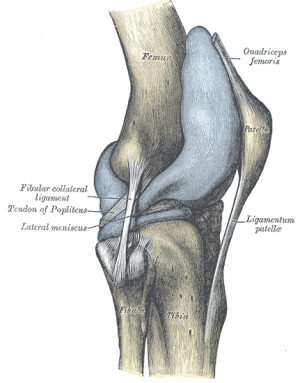 knee joint png