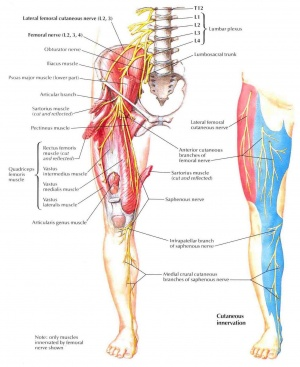 split femur diagram femoral nerve physiopedia