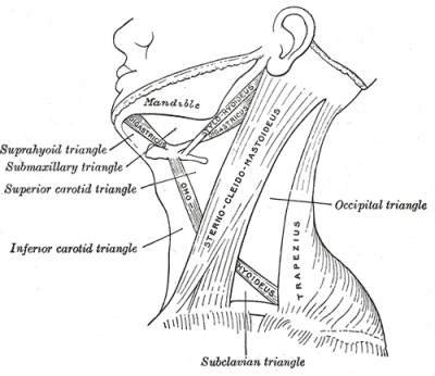 Sternocleidomastoid - Physiopedia