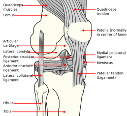 lateral collateral ligament - physiopedia, Human Body
