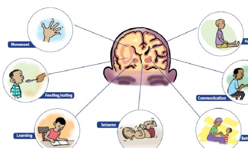 Tissues, organs, & organ systems