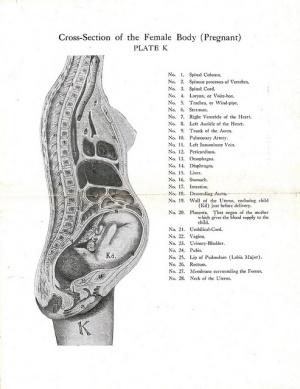 Pregnancy Related Pelvic Pain Physiopedia