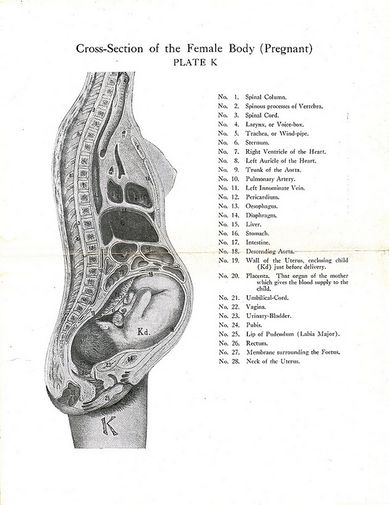 one half of female pelvic bone diagram pregnancy related pelvic pain physiopedia  pregnancy related pelvic pain physiopedia