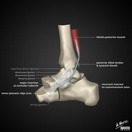 Posterior Tibial Tendon Dysfunction - Physiopedia