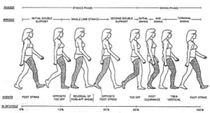 8 phases of gait cycle.png