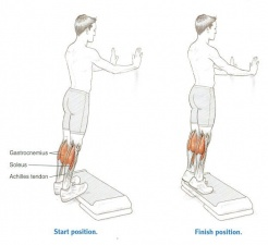 Fig. 9 : Standing Heel-Rise Test