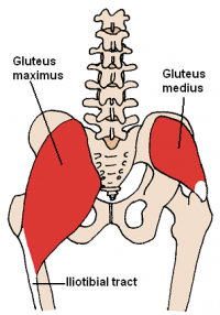 Posterior Hip Muscles.PNG